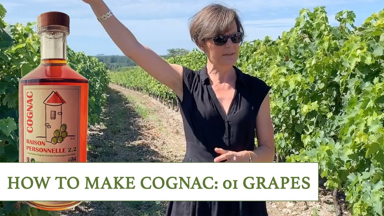 How To Make Cognac At Raison Personnelle 01 Grapes Youtube