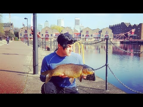 A Casual Urban Carp After College - Fishing London Docks