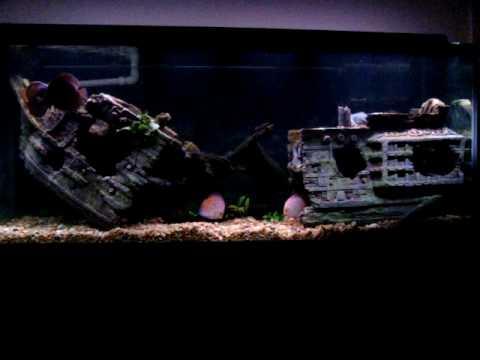Astounding 220g pirate shipwreck discus aquarium youtube for Fish tank shipwreck