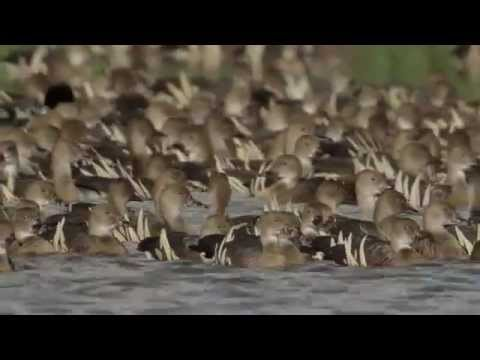 Duck WISE (Waterfowl Identification, Safety, Effective And Efficient Hunting)