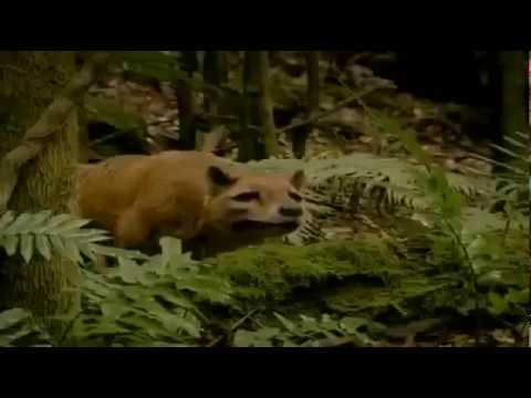 Tasmanian Tiger Extinct Animal Resurrection Biology Documentary