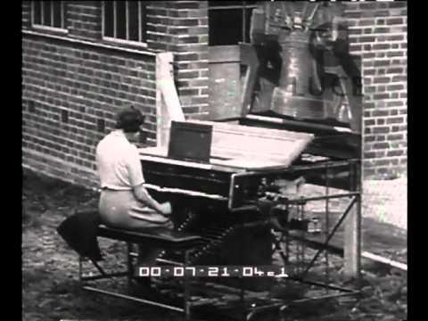 Curiosità: animali e musica