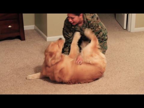 Adorable Golden Retriever Welcomes Marine Home
