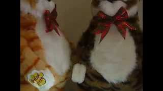 Поющий и танцующий кот