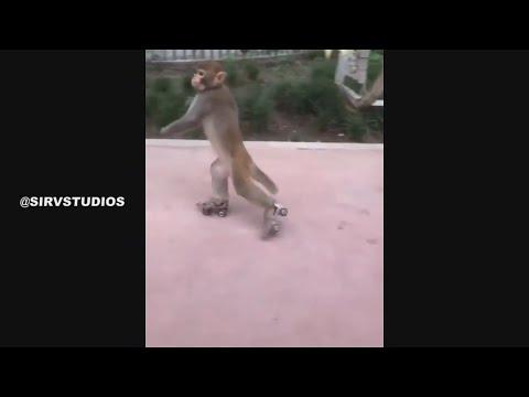 Skating Monkey .. الليل الليل الليل يا ميمون