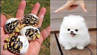 Cute baby animals Videos Compilation cute moment of the animals  Cutest Animals #2