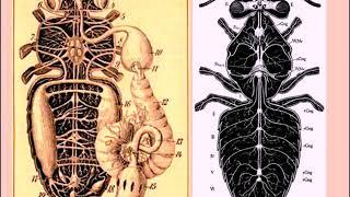 Anatomy of Animals: Invertebrata and Vertebrata, Video Lecture-02.
