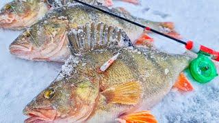 ШОК РЕКОРДНЫЕ ОКУНИ НА ЧЁРТА ТАКОГО ВЫ НЕ УВИДИТЕ НИГДЕ Рыбалка первый лед 2020