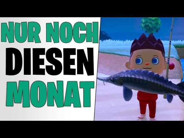 MACHT DAS NOCH IM MÄRZ - Huchen, Stör & Anglerfisch | Animal Crossing New Horizons Tipps deutsch
