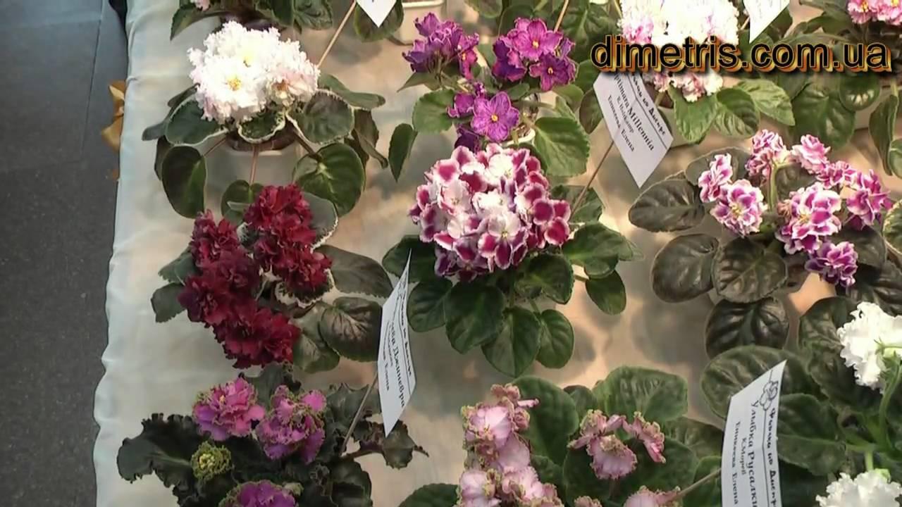 Интернет магазин цветов фиалок днепропетровск, букет каталог
