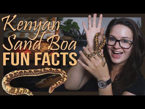 KENYAN SAND BOA FUN FACTS