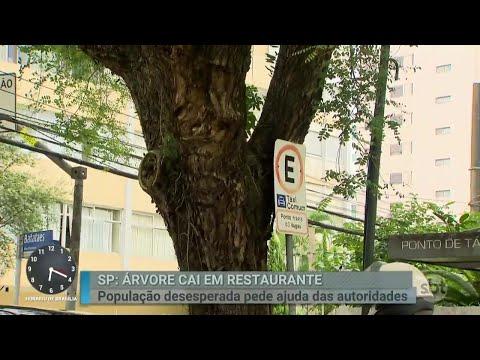Queda de árvores gigantes preocupa moradores de bairros de SP | Primeiro Impacto (03/04/18)