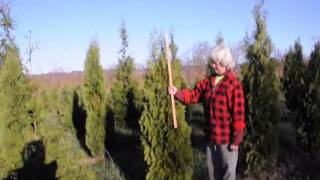 How Late in the Fall Can You Plant Trees?