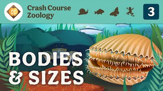 Diversity of Bodies & Sizes (but mostly crabs): Crash Course Zoology #3