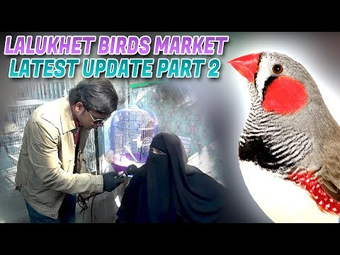Lalukhet Sunday Birds Market Latest Update 14-1-2018 Part 2 (Jamshed Asmi Informative Channel)