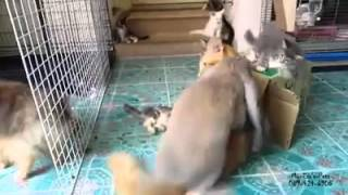 Кролики как и мужики любят секс