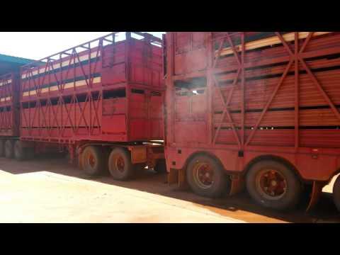 Australien Road trip 2016 Road Train with Cattle Roebuck Broome Derby WA  Outback Truckers Australia