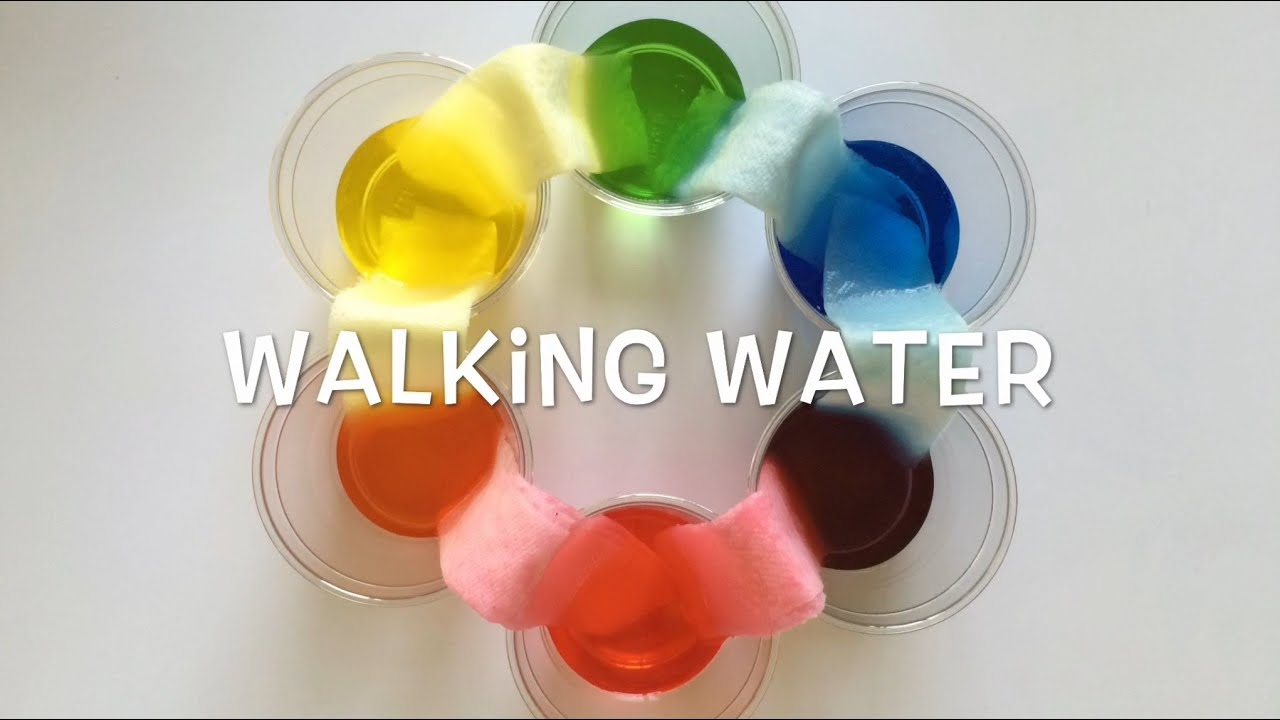 Walking Water - Science Project For Kids - YouTube