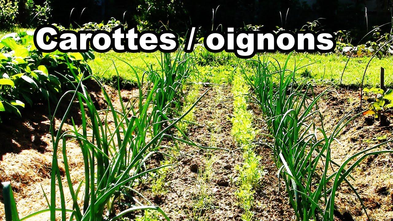 Fabuleux Osez l'association carotte / oignons - YouTube MW96