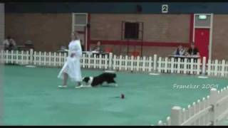 The Best Canine Freestyle Routines (in My Opinion)