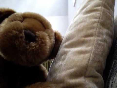 Ady vallicourt news happy homeless bear