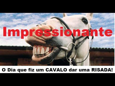 Resultado de imagem para cavalo rindo