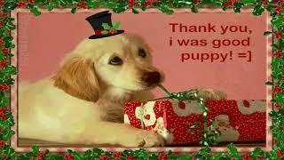 Futter für Waschbären von Happy Dog - Dickes Dankeschön an Happy Cat & Happy Dog