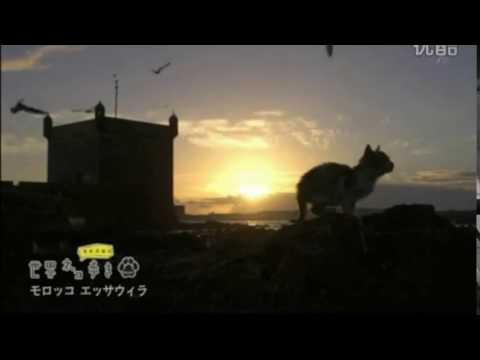 【悶絶注意】可愛すぎる子猫がにゃー!in Morocco:Cute cat meows in Morocco2