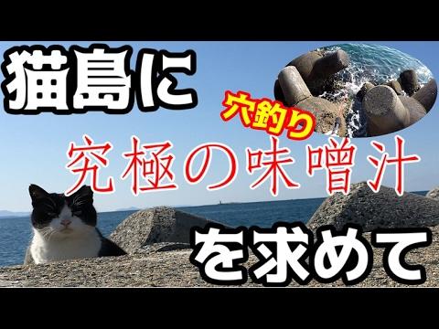 猫まみれの猫島で究極の味噌汁を作るべく、穴釣りに挑む!