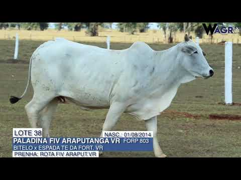 LOTE 38   FORP 803