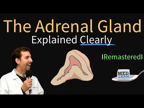 Adrenal Gland (Adrenal Cortex) Anatomy, Physiology, Disorders, And Hormones