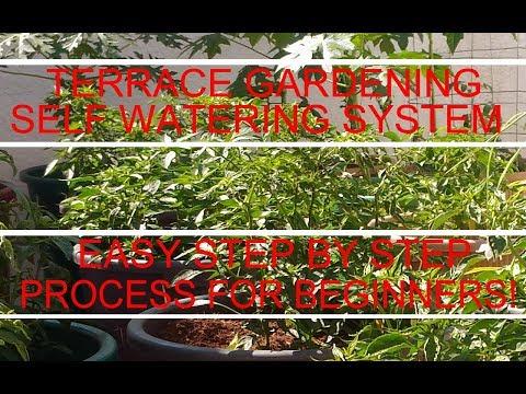 Terrace Garden - Vegetable Terrace Garden Ideas for Beginners - Part II