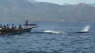 The Whale Hunters from Lamalera - Part 1 / Velrybáři z Lamalery - Část 1