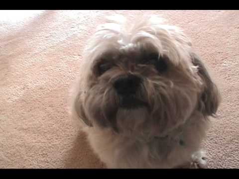 AMAZING TALKING DOG!   MOVED to    http://www.youtube.com/watch?v=bR79y4oVDNg