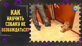 ТВ МИР-Как научить собаку не возбуждаться когда приходят гости