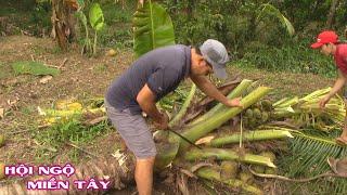 Đốn nguyên cây dừa làm món GÀ HẤP TRONG CỦ HỦ DỪA | Hội Ngộ Miền Tây - Tập 15
