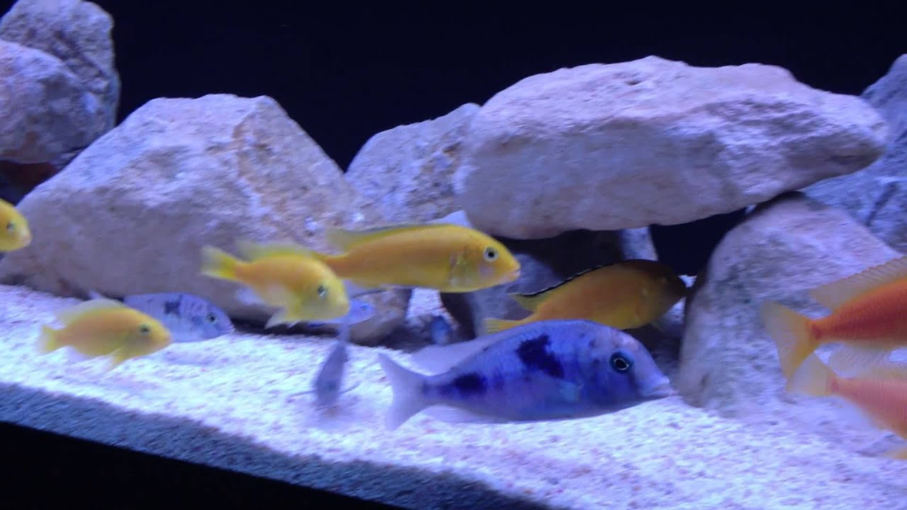 Fluval roma 240 aquarium fish tank - Fluval Roma 240