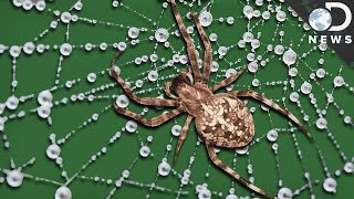 What Makes Spider Silk Tougher Than Steel?