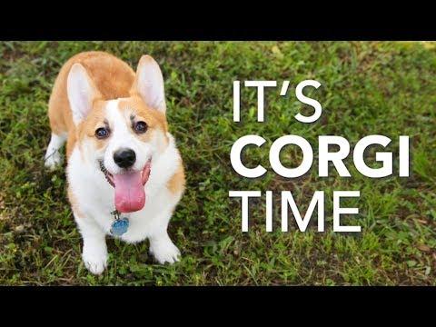 A Big Corgi Party • Texas Corgi Roundup