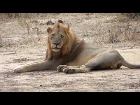 Safari to Lower Zambezi National Park   June 2013