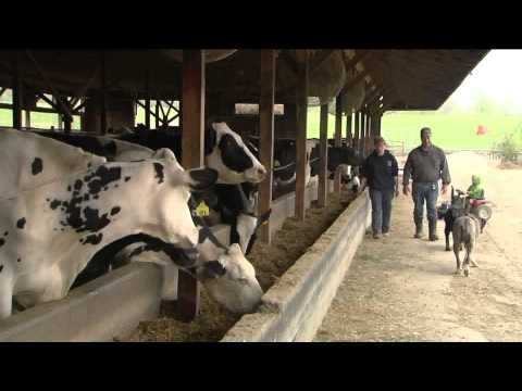 6/06/14 The 2014 Vermont Dairy Farm of the Year on Across The Fence