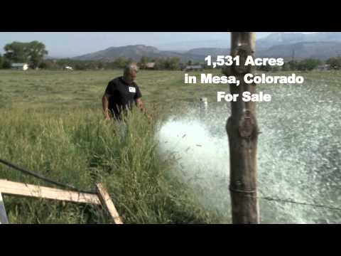 Colorado Cattle Ranch for sale