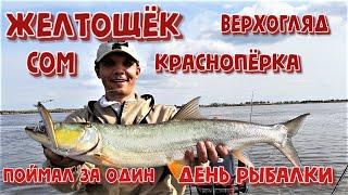 Желтощек Сом Верхогляд Красноперка Поймал за один день рыбалки Рыбалка на амуре 2020