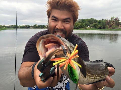 ตกปลาช่อนEPร่องเรือตกปลาช่อนแม่น้ำท่าจีนBY Yod911