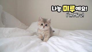 고양이 합사 1일차, 하루가 오빠된 날!