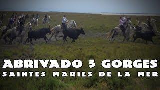 SAINTES MARIES DE LA MER Abrivado des 5 Gorges 1415-06-2019 🐴