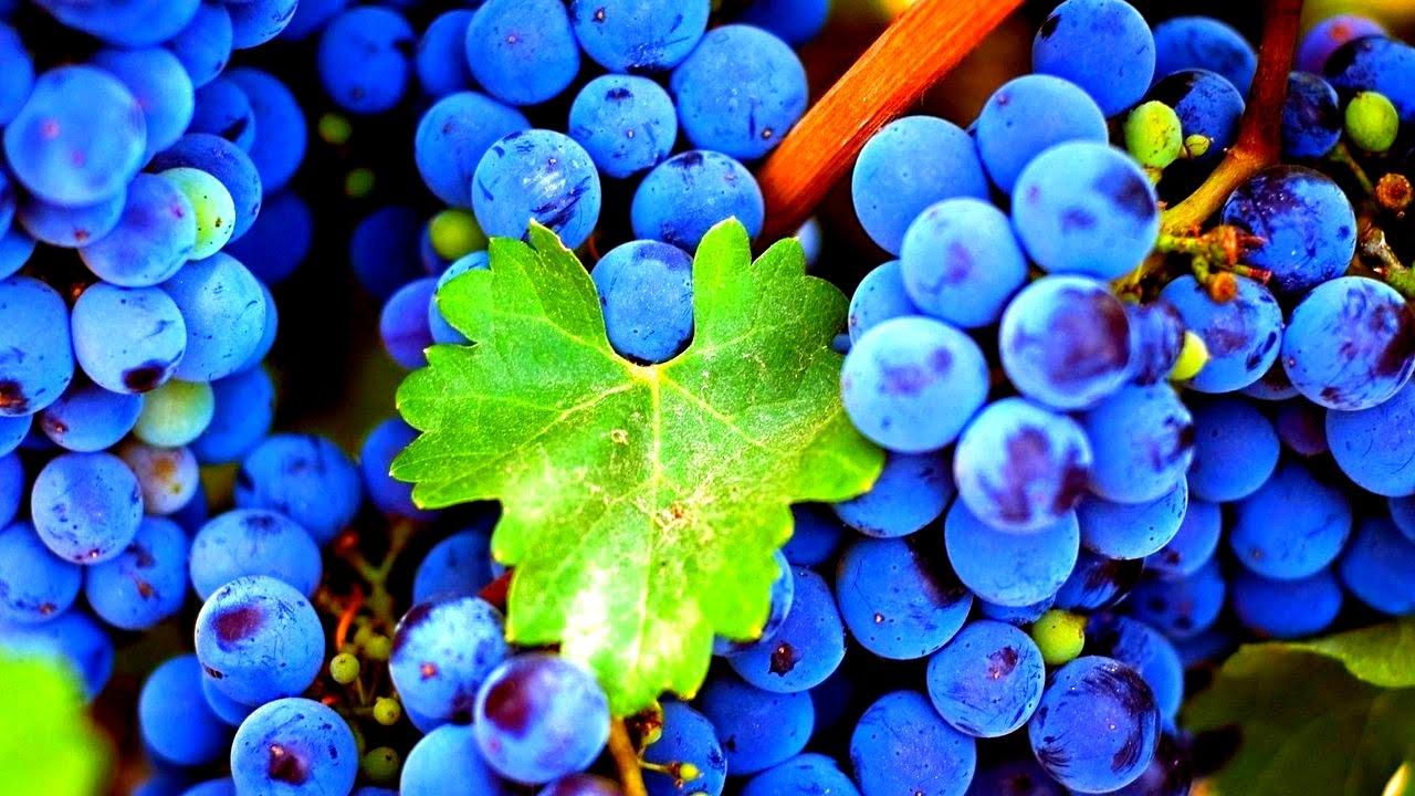 Картинки виноградом, фото открытки открытки
