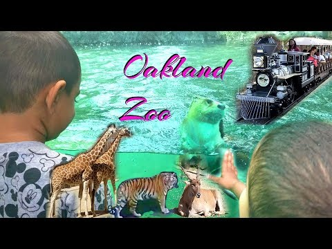 Oakland Zoo | Perfect Day Out with the Kids | PalsLivesLife