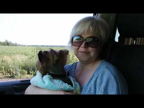 В Черногорию из Донбасса с собакой на автомобиле!2019 День первый
