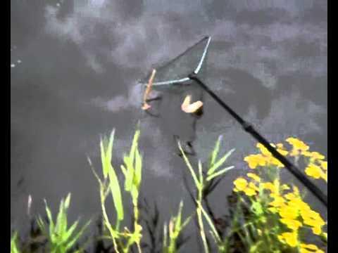 Perch from Barrow River - okonek z Barrow :)